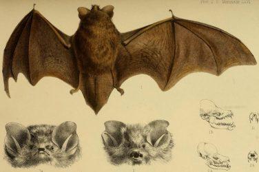 Biodiversity Heritage Library_flickr_parissecret
